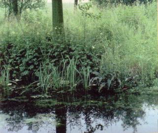 Comment chasser les tourterelles de son jardin - Comment chasser les taupes du jardin ...