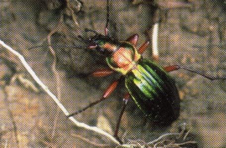 La lutte biologique au jardin l 39 utilisation des - Insectes nuisibles du jardin ...