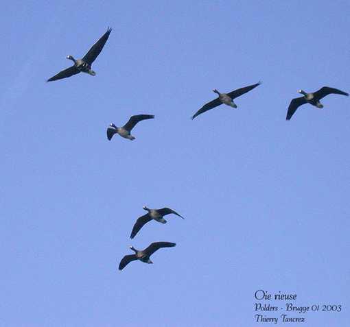 Fiche s4 les migrations for Les oiseaux du sud de la france